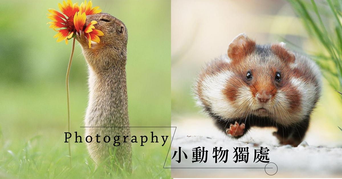 生活很苦但你要甜︰攝影師鏡頭下的小動物,享受平凡生活的快樂滿足~